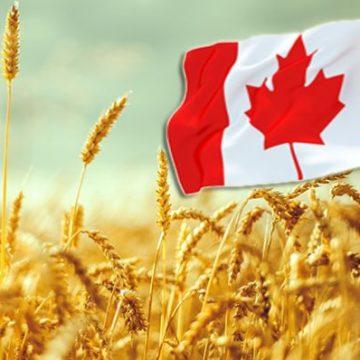 Канадська система управління ланцюгом поставок